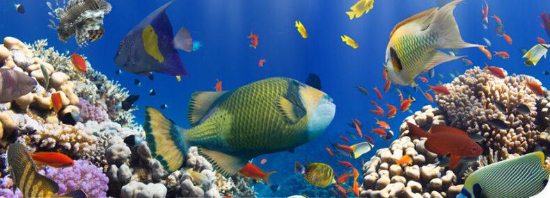 Great Barrier Reef: Ein Viertel des Naturwunders bereits zerstört