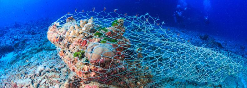 Gute Nachricht aus Brüssel: EU-Verbot für Schleppnetze in der Tiefsee