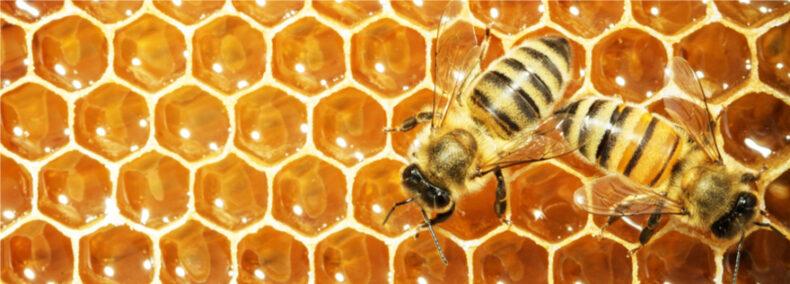 Das weltweite Bienensterben und was wir dagegen tun können
