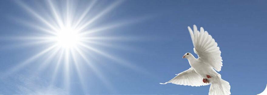 Jesus ist Wahrheit - Seite 3 Taube-sonne-header-880x316